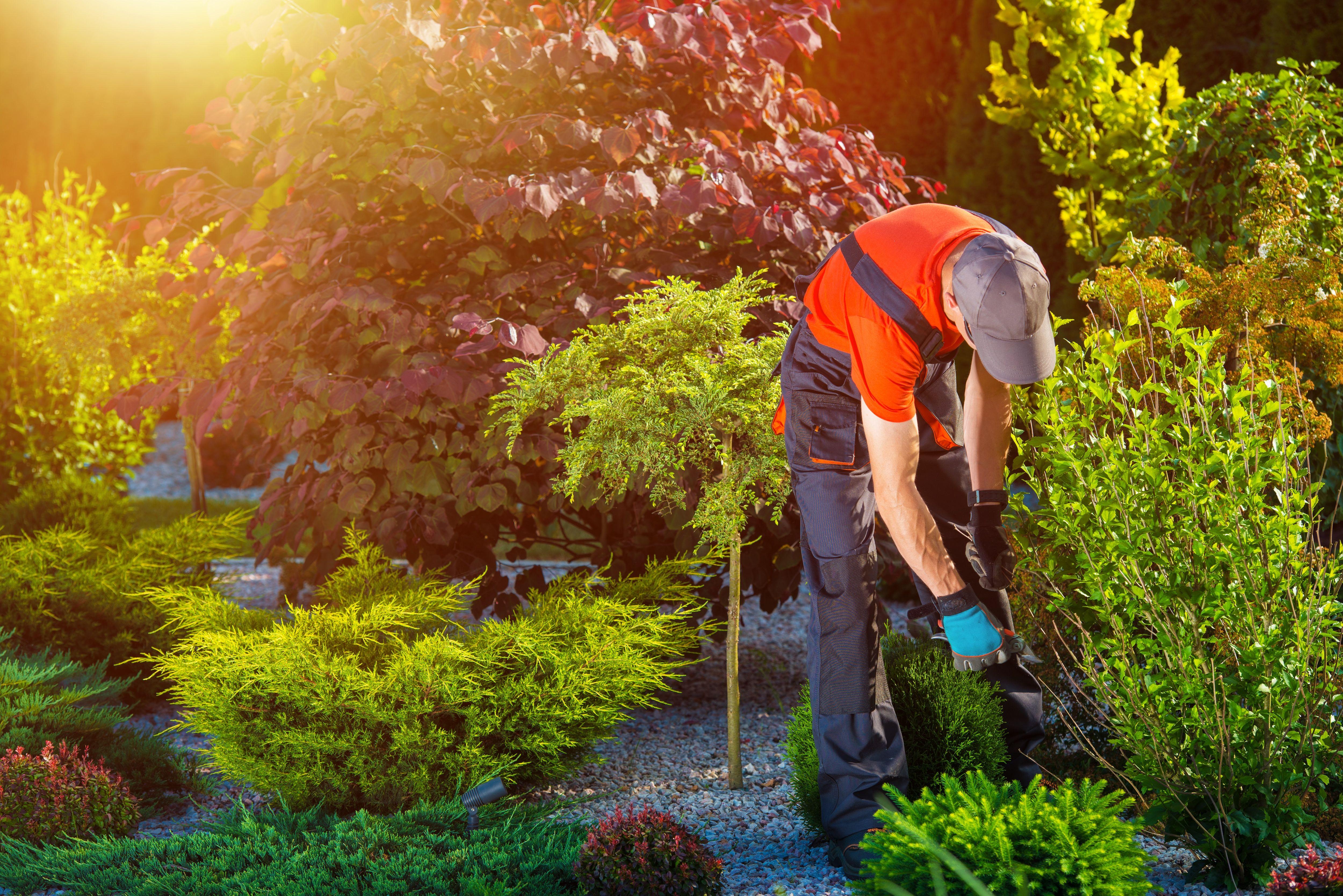 Mantenimiento de jardines: Servicios de Reymasur 13