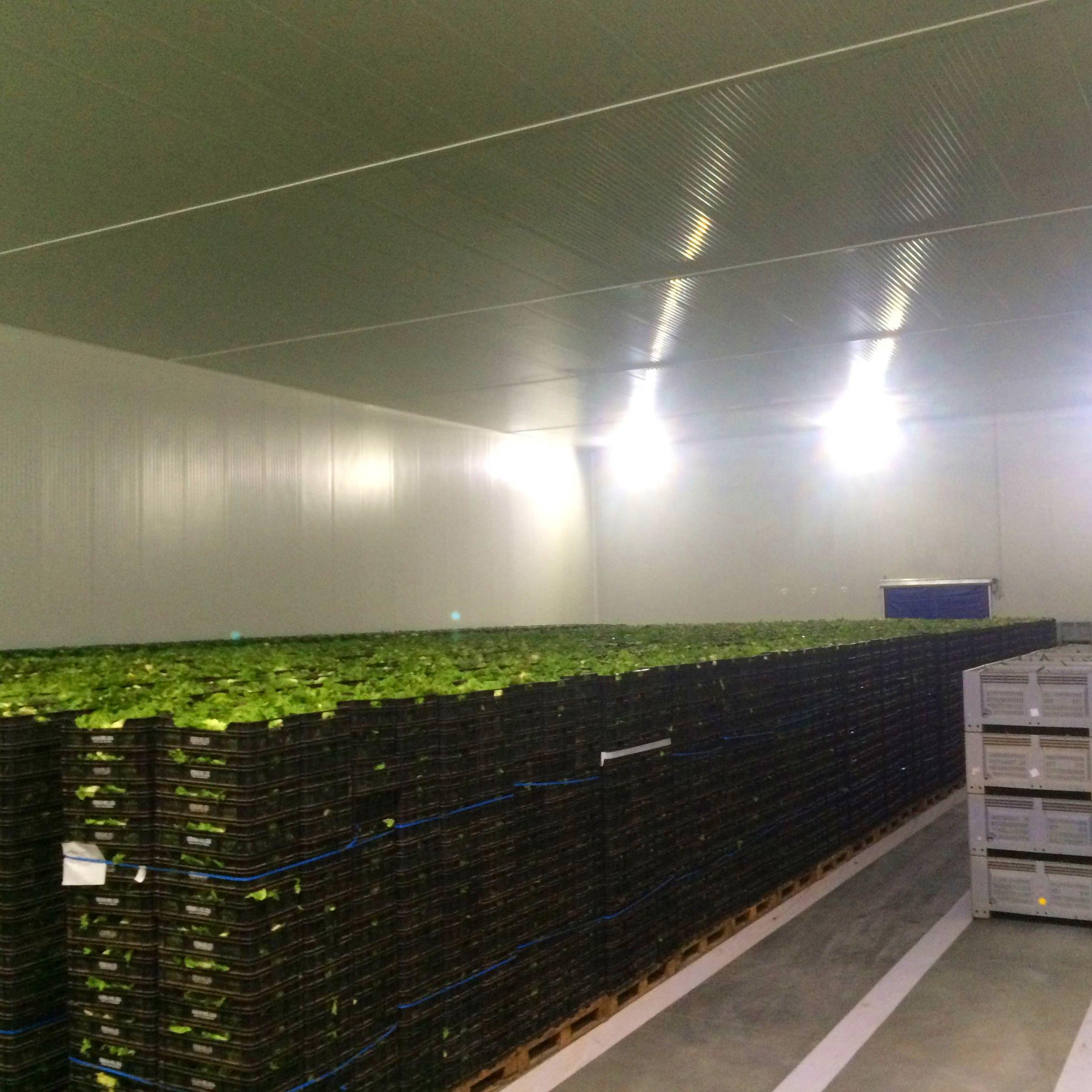 Foto 38 de Especialistas en refrigeración industrial en Alcantarilla | MH Refrigeración