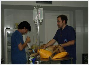 Instalaciones con servicio de cirugía para mascotas