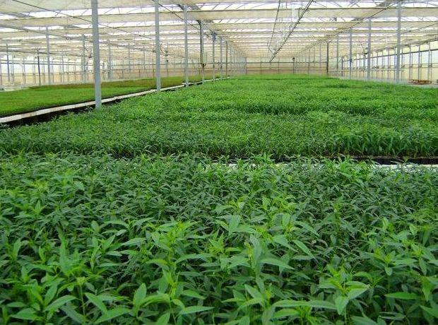 Plantas de pistacho y almendro : Servicios de Isaticar