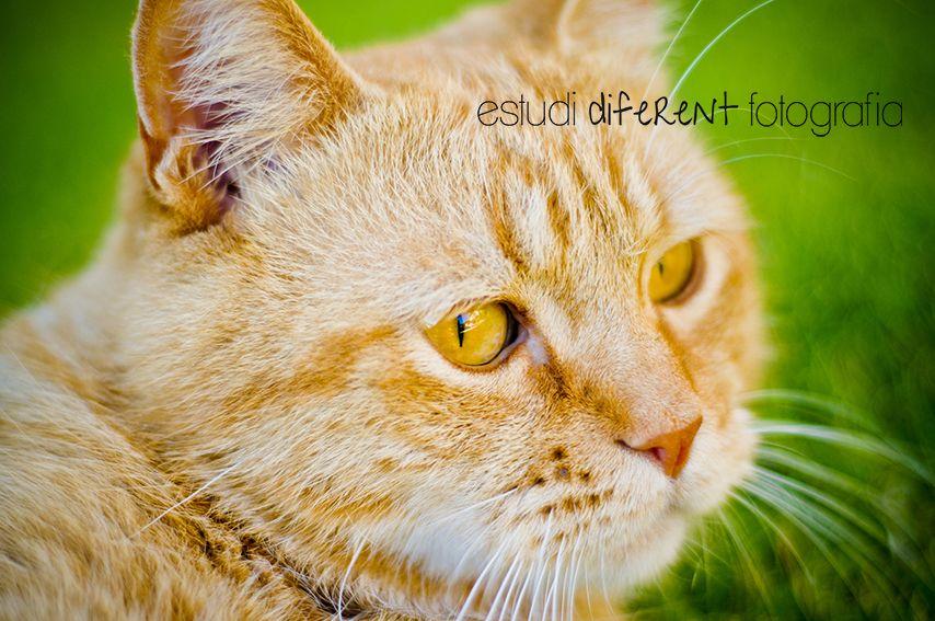 Fotografías para animales El Vendrell