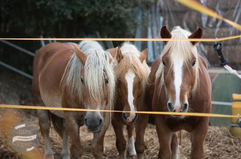 Faty, Dory y Karina!!