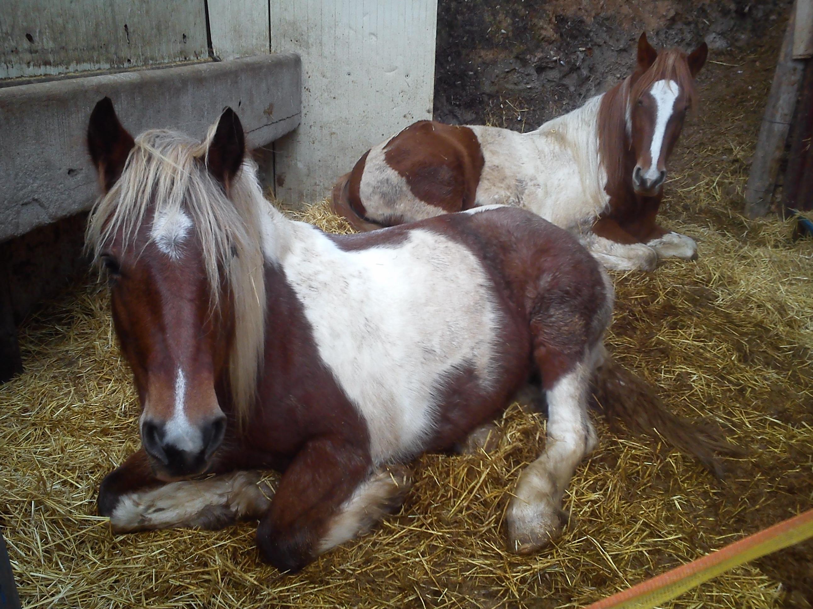 Piga y Milka descansando!!