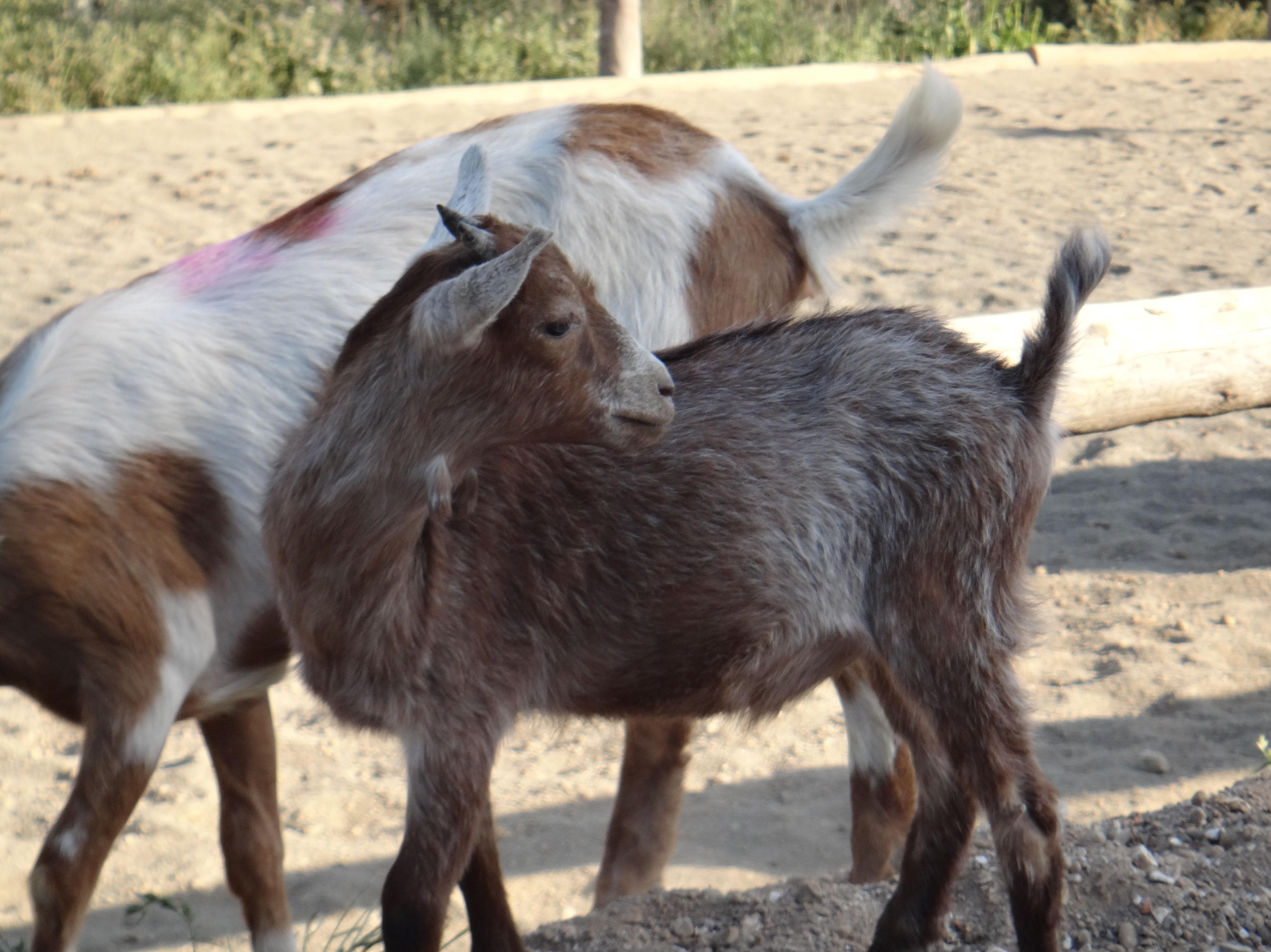 Foto 13 de Hípica y equitación en (Les Fonts) | Hípica Can Buimira