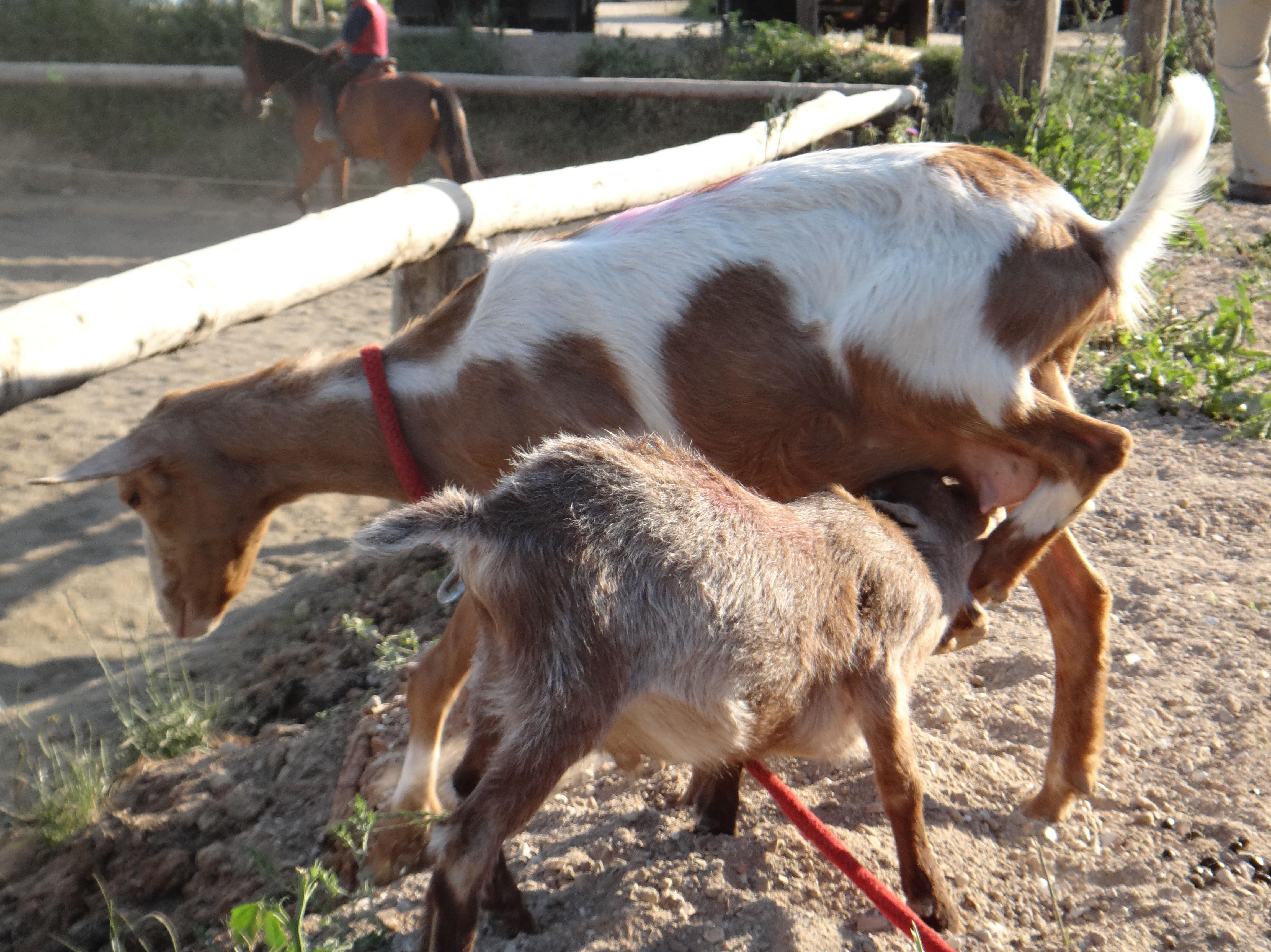 Foto 12 de Hípica y equitación en (Les Fonts) | Hípica Can Buimira