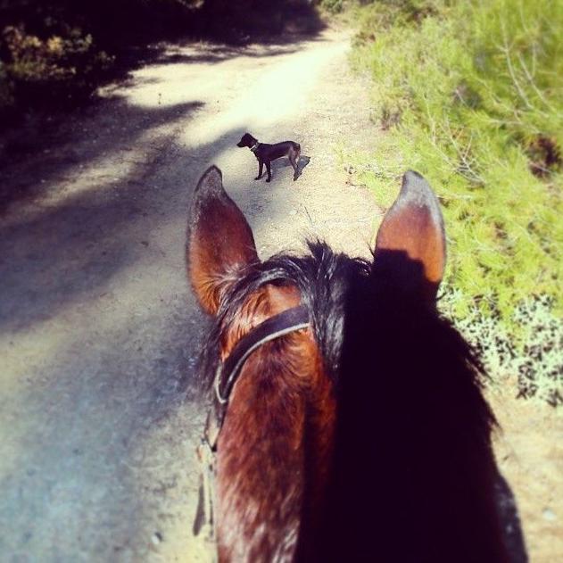 Foto 16 de Hípica y equitación en (Les Fonts) | Hípica Can Buimira