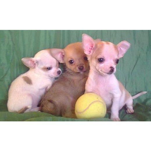 Cachorro de perros: Productos y servicios de Bilbotxakur