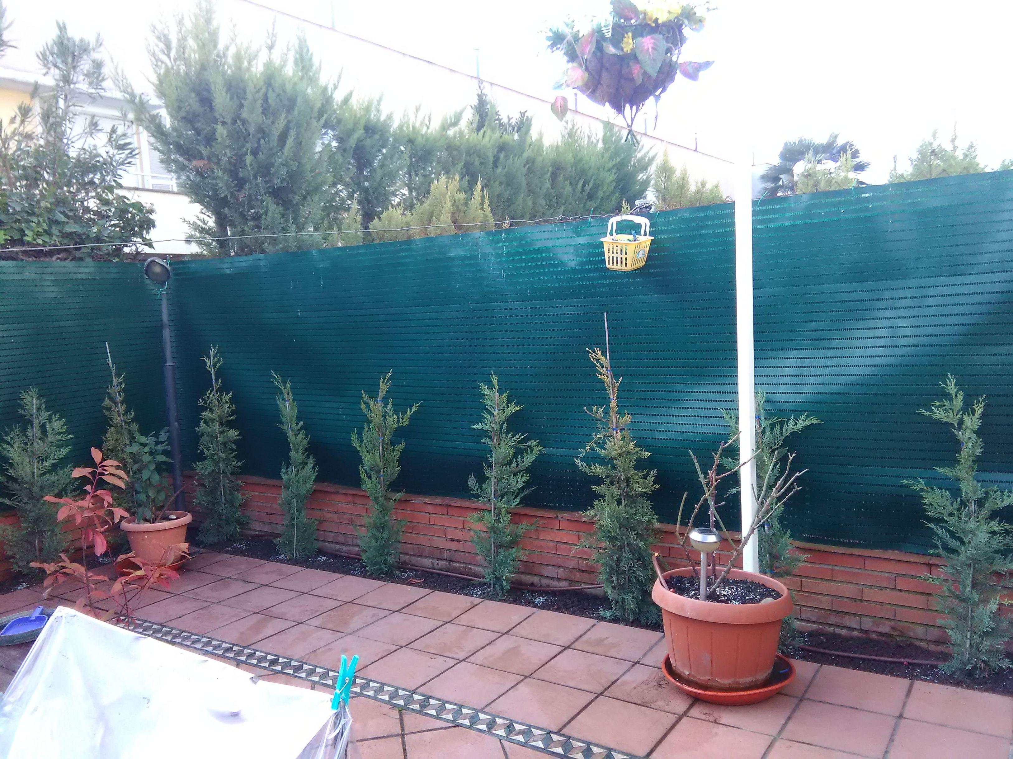 Suministro y colocación de plantas, arbustos