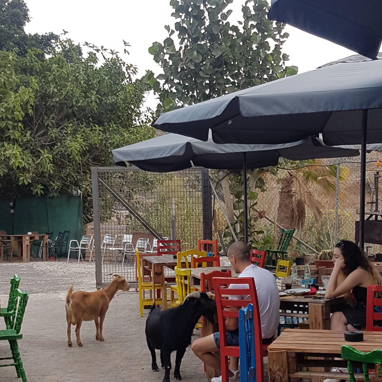 Foto 5 de Restaurant en  | Guachinche La Cueva de Chichio
