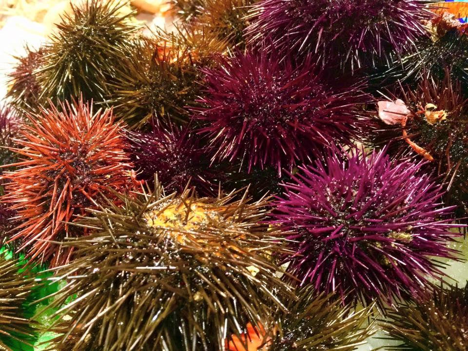 Comprar pescado y marisco en Mataró