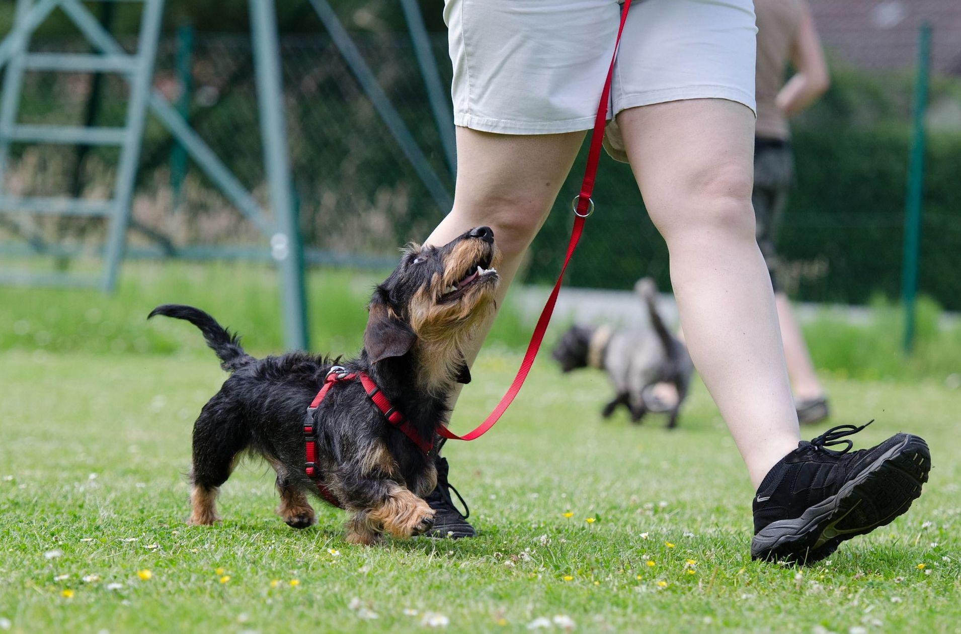 Curso profesional de educador canino y adiestrador en Extremadura