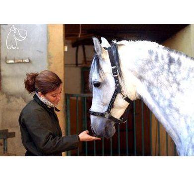 Unidad del dolor y rehabilitación : Servicios veterinarios de Pulso Animal