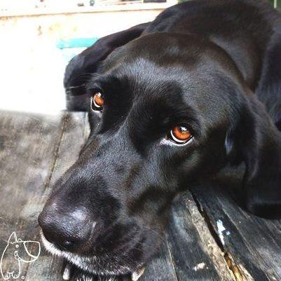 Medicina general  : Servicios veterinarios de Pulso Animal