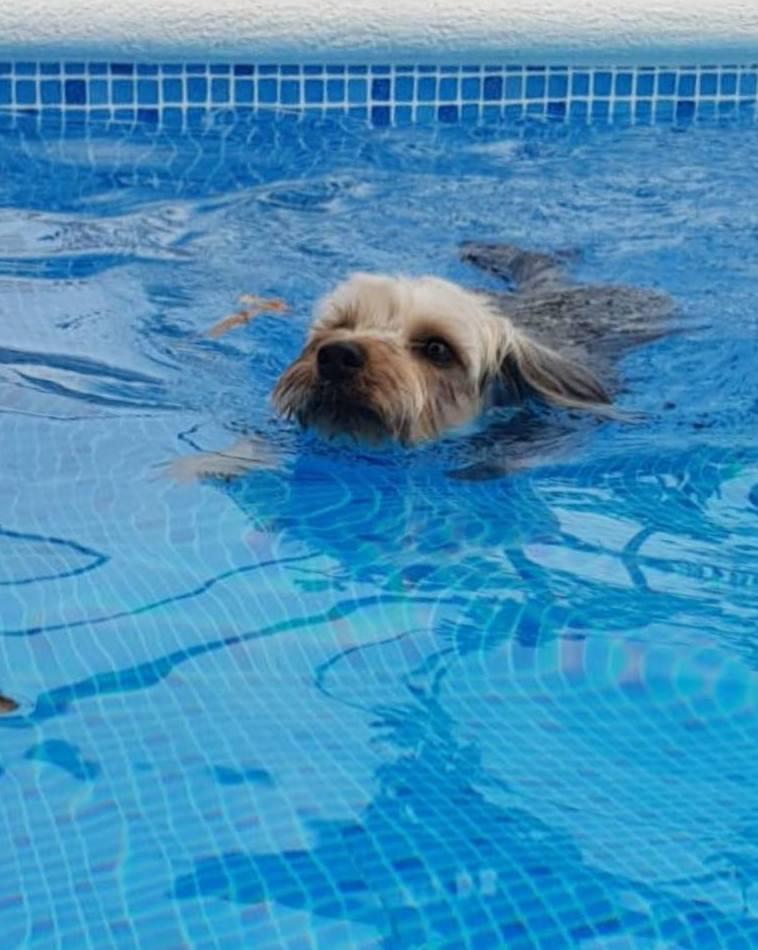 Hidroterapia canina en Manzanares el Real