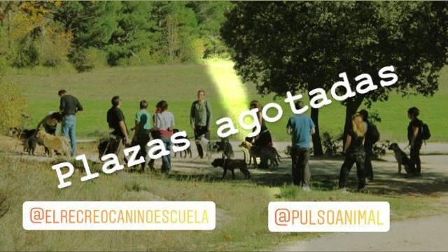 El Recreo Canino y Pulso Animal organizan. Enero 2019