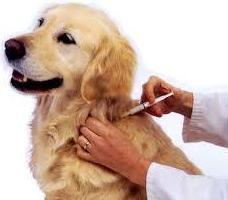 Clínica veterinaria Campo de Gibraltar