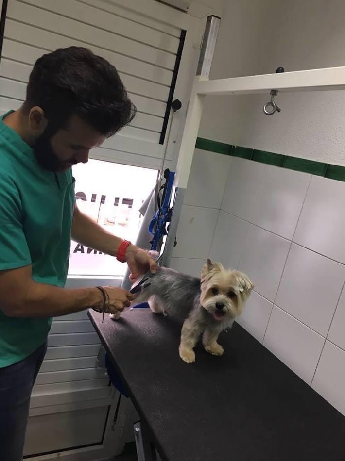 Cortando el pelo a una de nuestras mascotas!