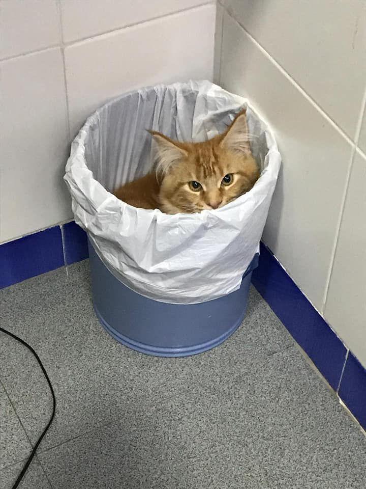 El otro día vino a su primera visita Maya. Después de la exploración encontró su sitio y tan ricamente . A los gatos les encanta esconderse en cualquier sitio........ojo lavadoras, secadora.....