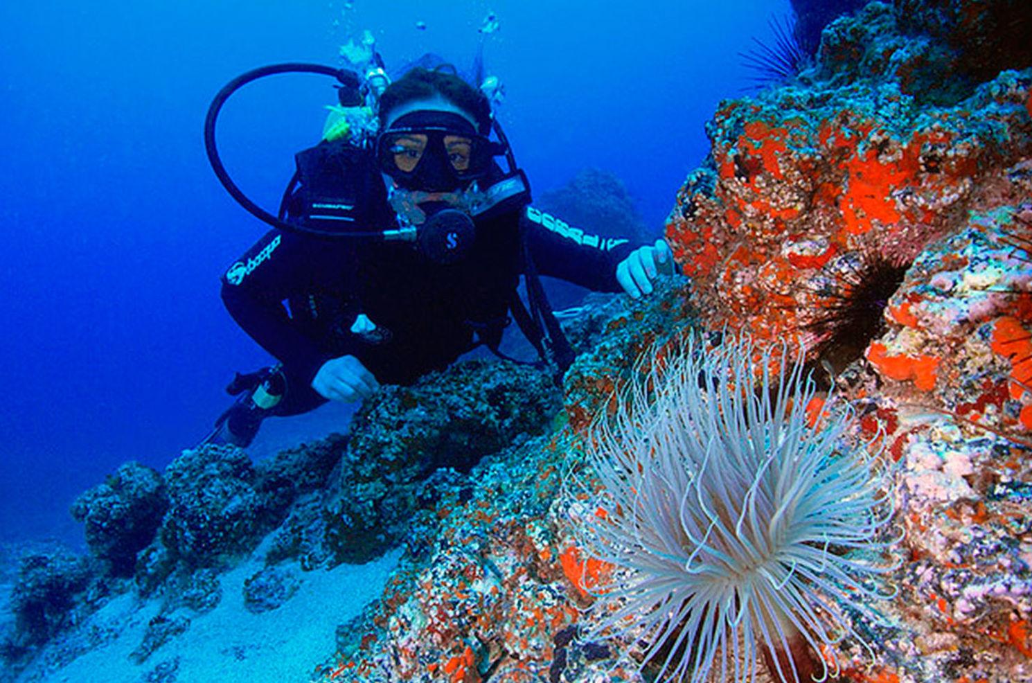 Reconocimientos médicos para buceo y submarinismo