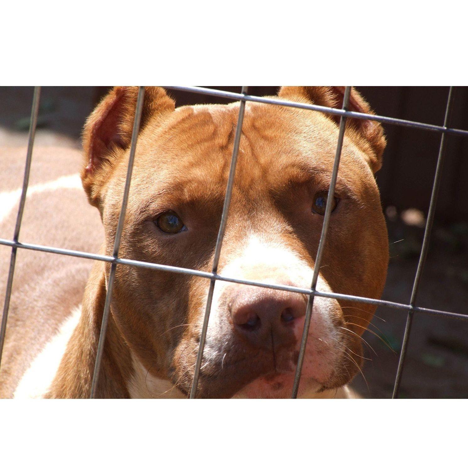 Tenencia de animales peligrosos: Reconocimientos y servicios de Vázquez Parras Centro de Reconocimientos
