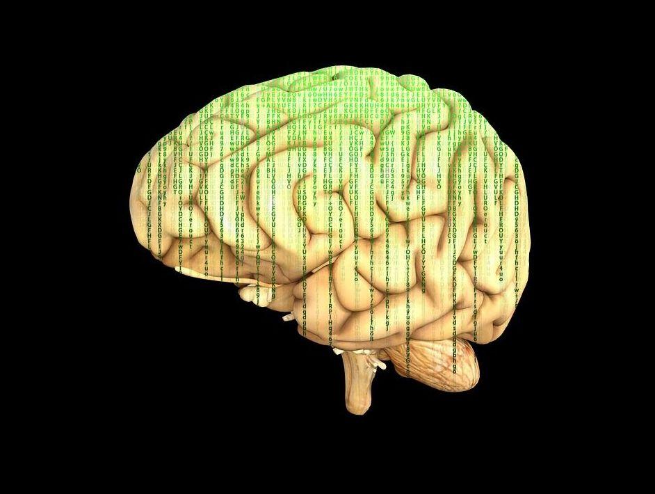 Descubren una proteína que podría tratar la pérdida de memoria
