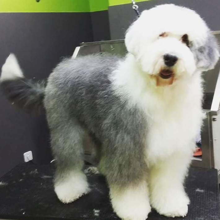 Foto 10 de Academias de peluquería canina y felina en Carballo | Perruqueria Canina Milú