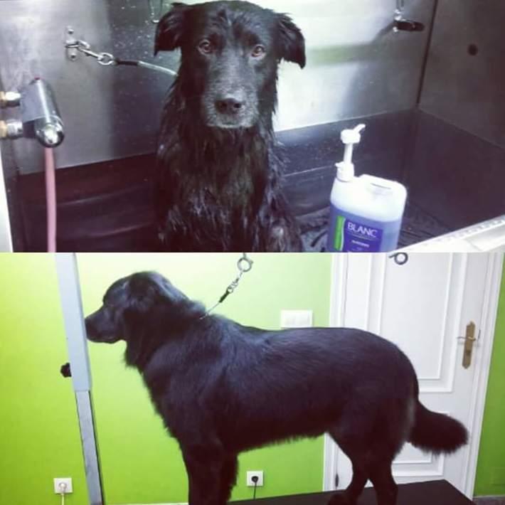 Foto 11 de Academias de peluquería canina y felina en Carballo | Perruqueria Canina Milú