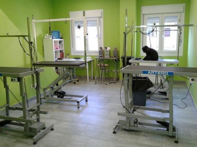 Foto 39 de Academias de peluquería canina y felina en Carballo | Perruqueria Canina Milú