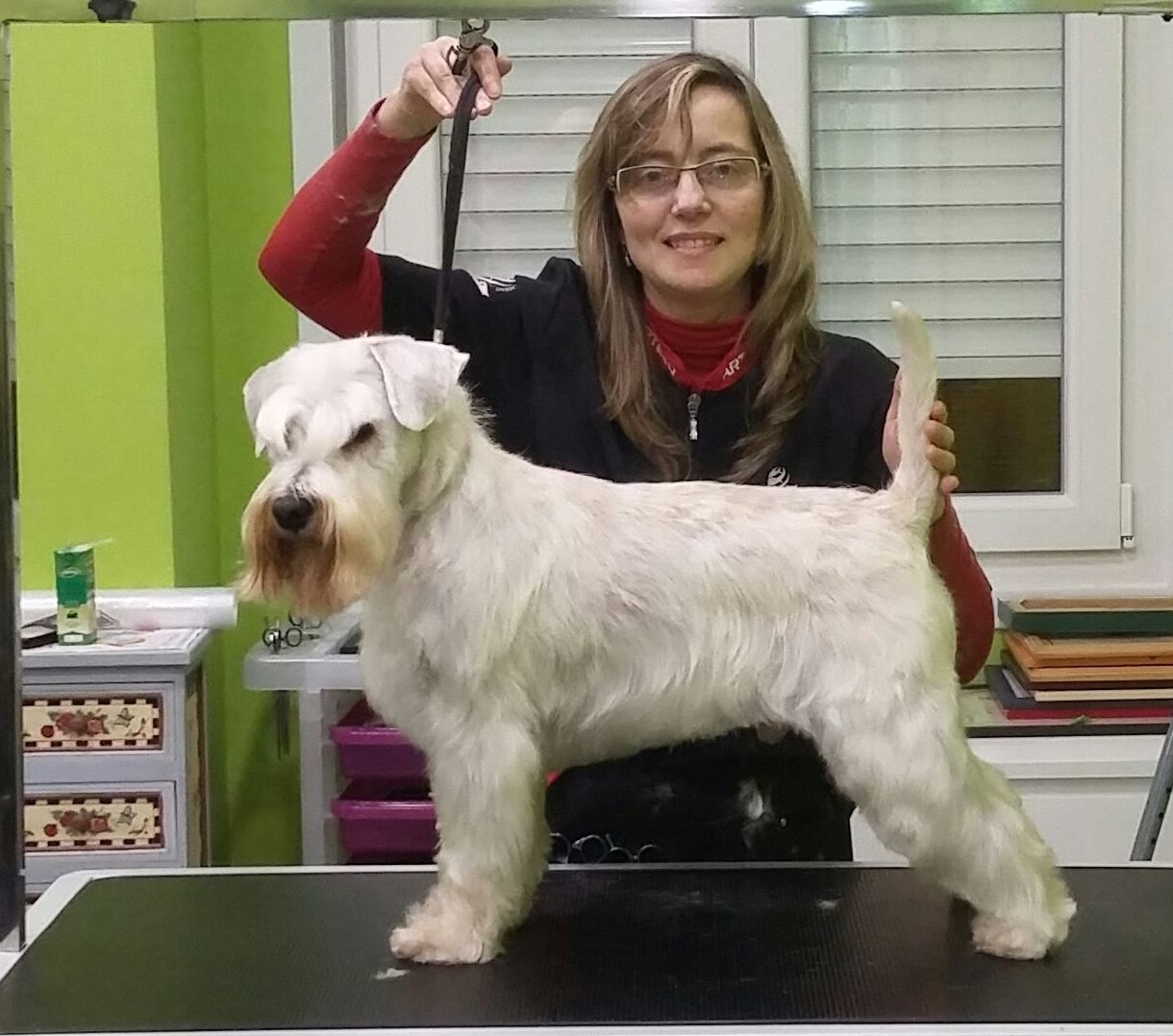 Peluquería Canina y Felina: Productos y Servicios de Perruqueria Canina Milú