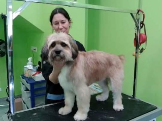 Academia de peluqueria canina en A Coruña