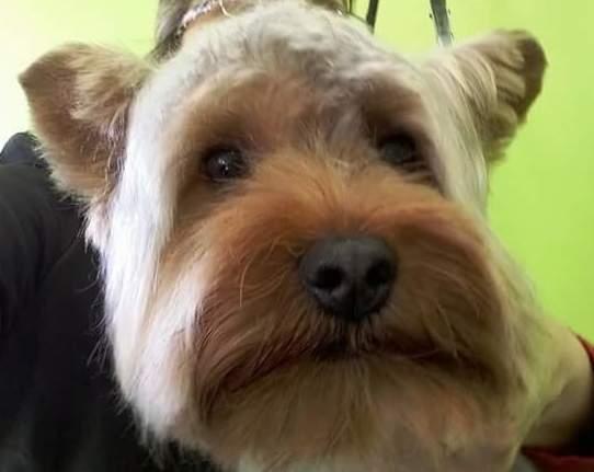 Perro con corte de pelo