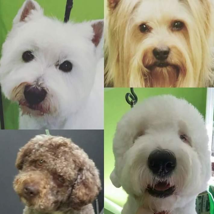 Foto 8 de Academias de peluquería canina y felina en Carballo | Perruqueria Canina Milú