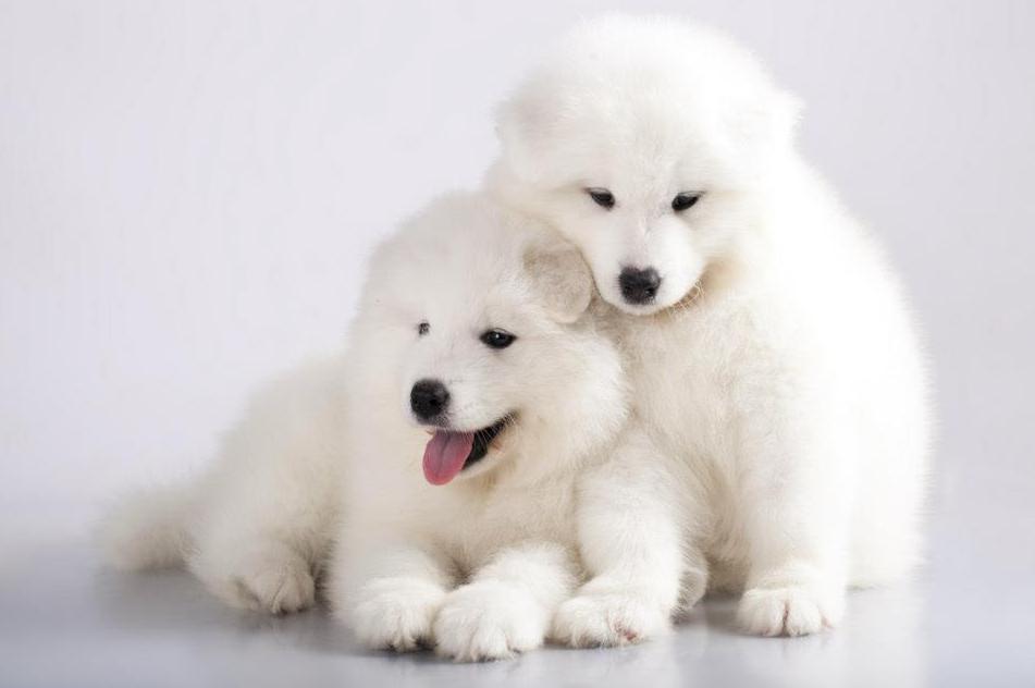 Peluquería para perros y gatos