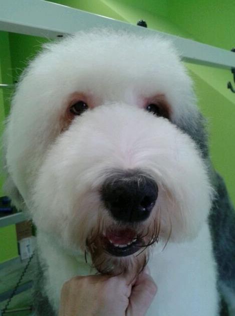 Foto 52 de Academias de peluquería canina y felina en Carballo | Perruqueria Canina Milú