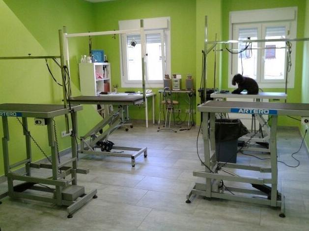 Foto 53 de Academias de peluquería canina y felina en Carballo | Perruqueria Canina Milú