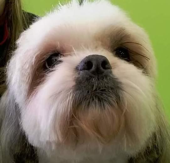 Cortes de pelo según raza canina