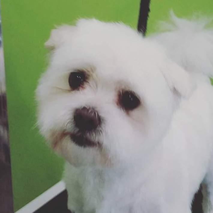 Foto 19 de Academias de peluquería canina y felina en Carballo | Perruqueria Canina Milú