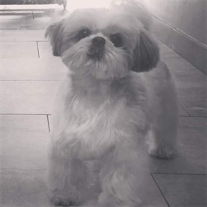 Foto 18 de Academias de peluquería canina y felina en Carballo | Perruqueria Canina Milú