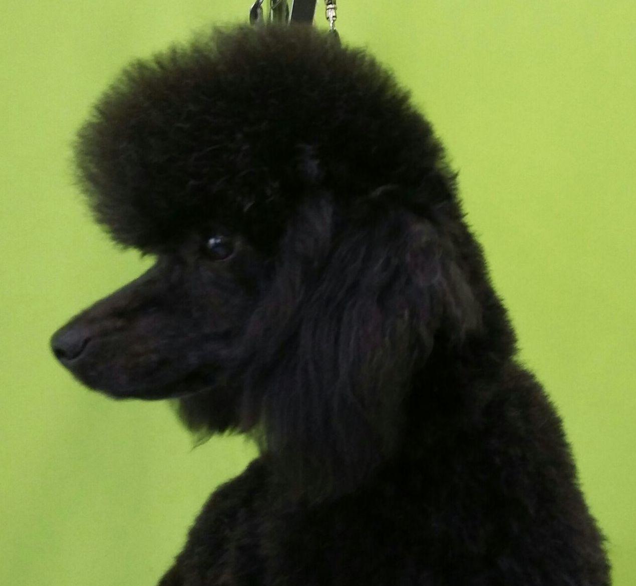 Peluquería canina en A Coruña