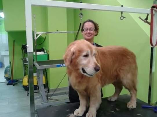 Baño y corte de pelo para perros