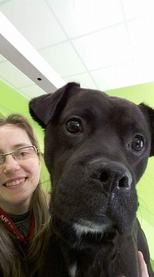 Foto 4 de Academias de peluquería canina y felina en Carballo | Perruqueria Canina Milú