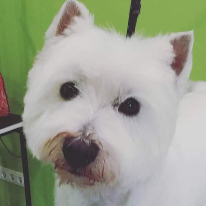 Foto 20 de Academias de peluquería canina y felina en Carballo | Perruqueria Canina Milú