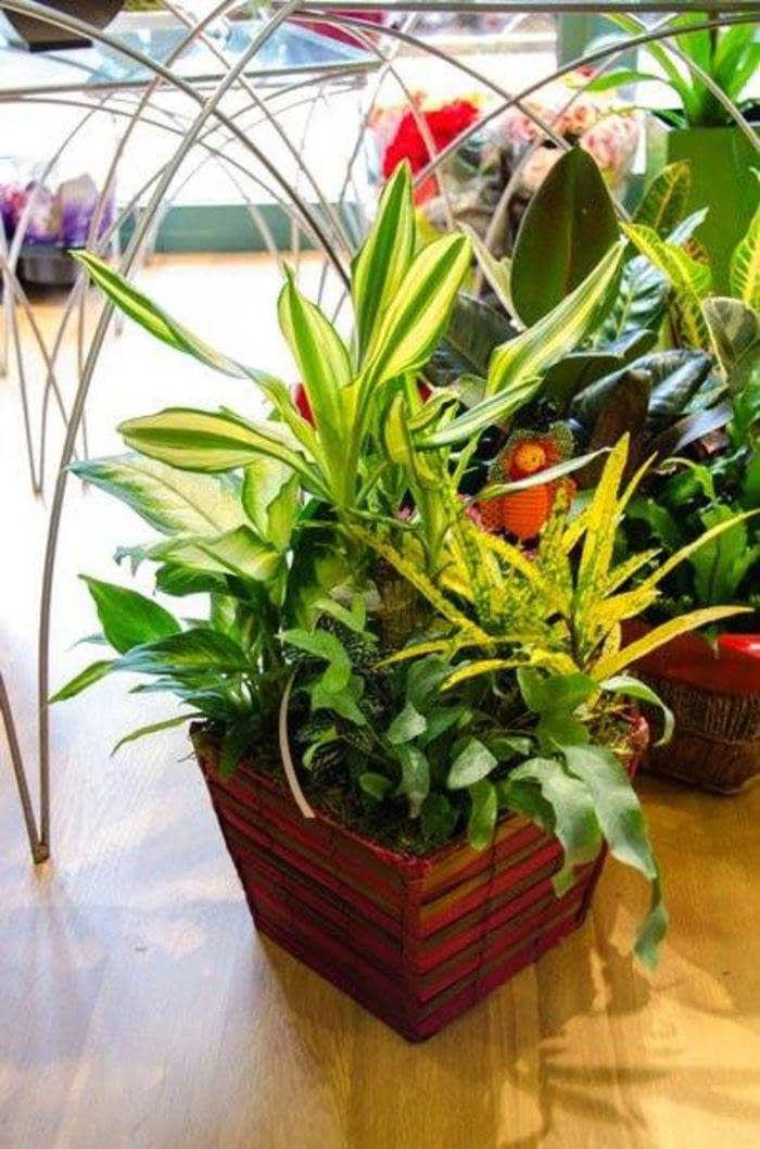 Plantas para fechas especiales en Ourense