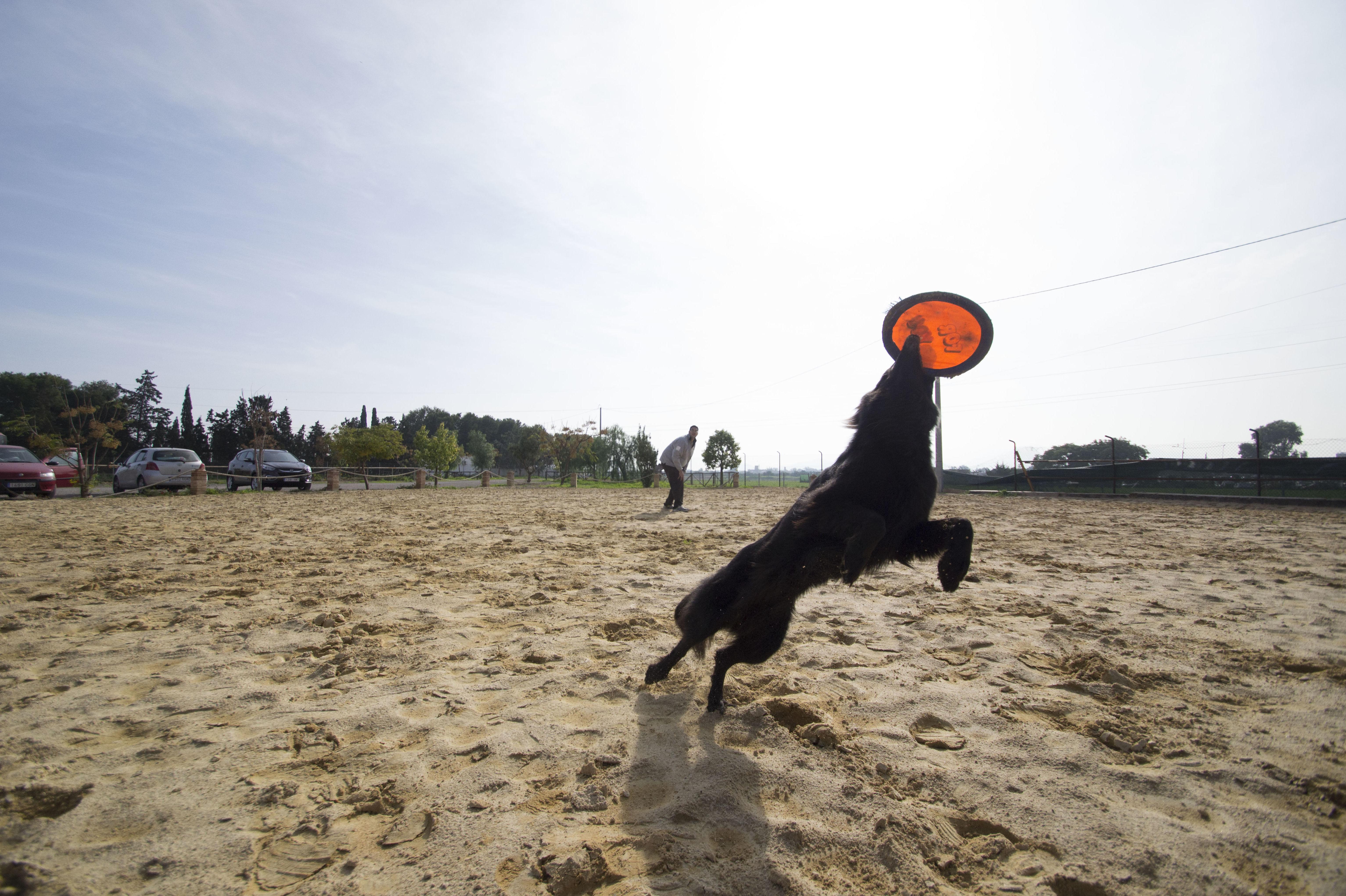 Foto 7 de Adiestramiento canino en Cartagena | Piolcan Adiestramiento Canino y Centro de formación