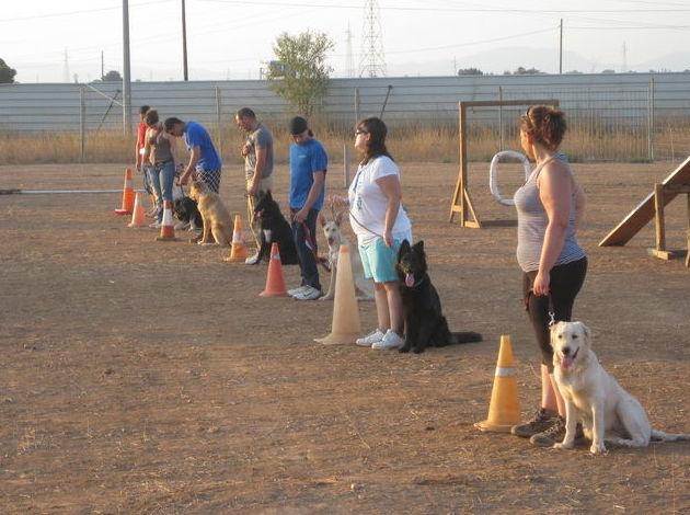 Foto 6 de Adiestramiento canino en Cartagena | Piolcan Adiestramiento Canino y Centro de formación