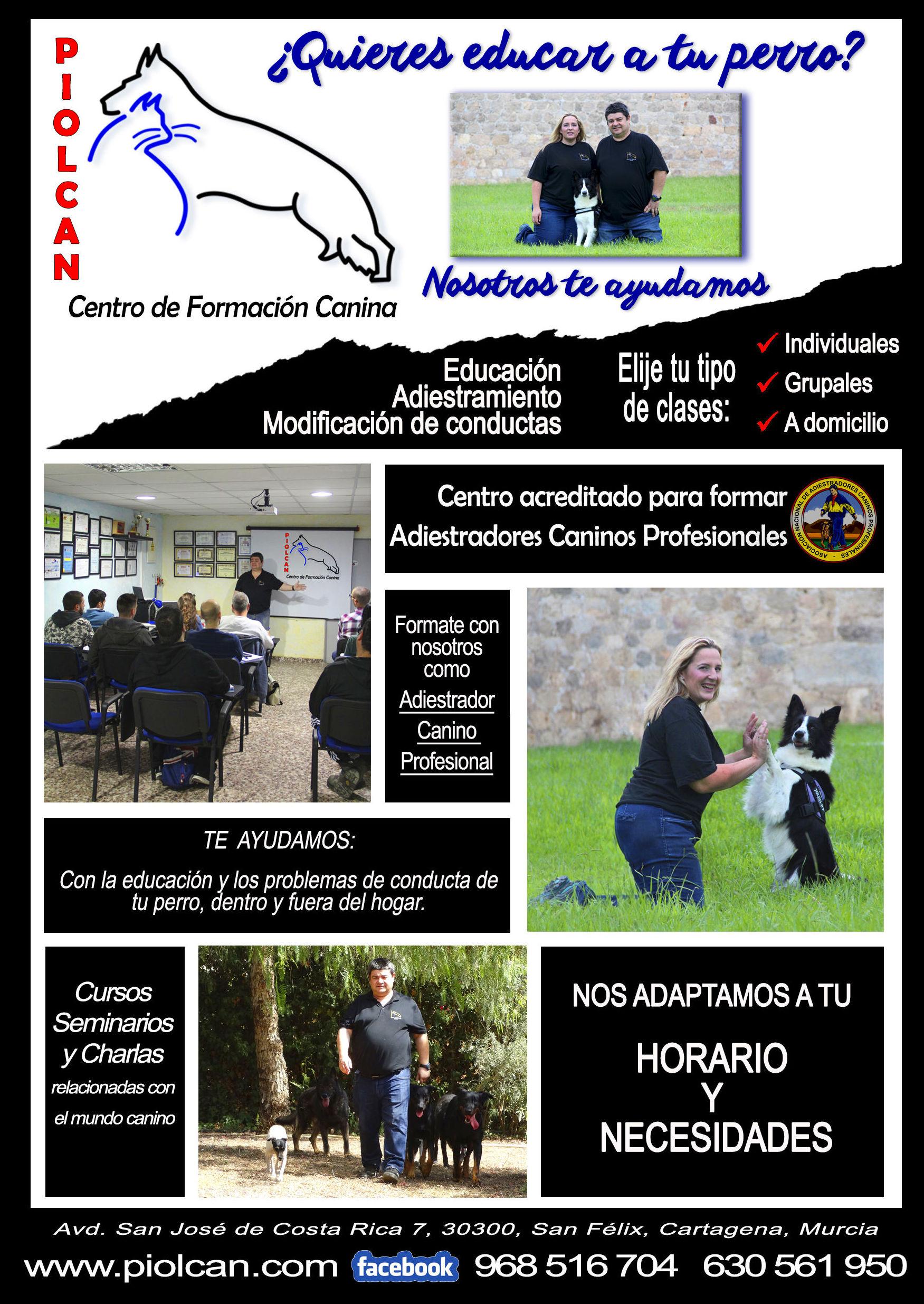Foto 2 de Adiestramiento canino en Cartagena | Piolcan Adiestramiento Canino y Centro de formación