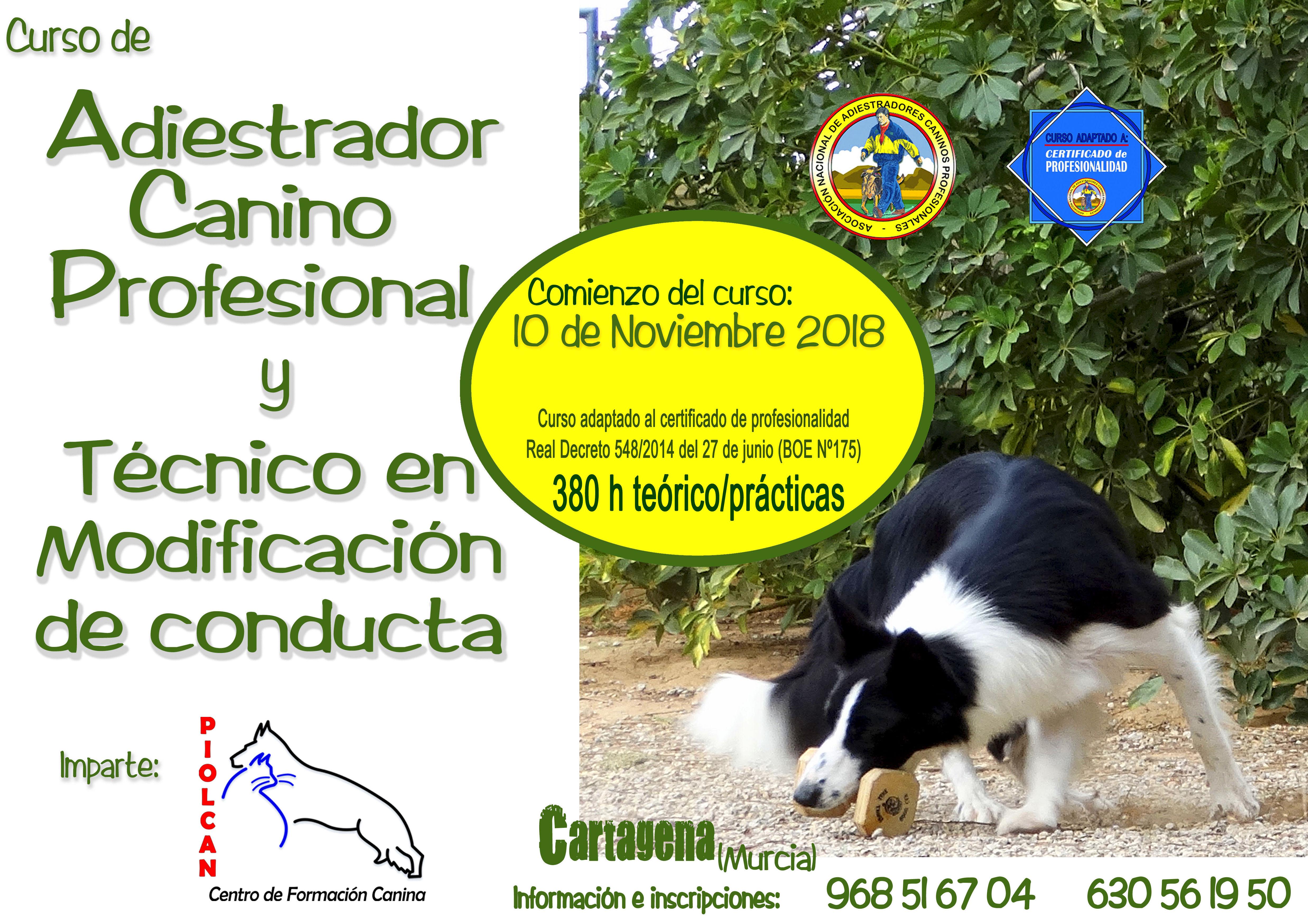 Seminarios y Cursos de formación Canina: Servicios de Piolcan Adiestramiento Canino y Centro de formación