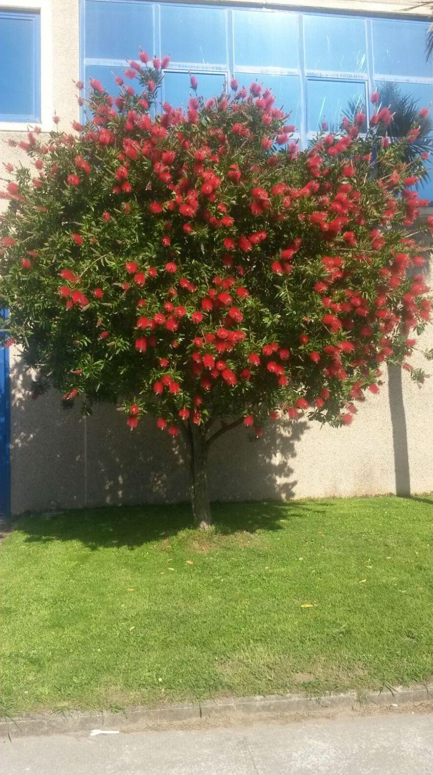 Creación y mantenimiento de jardines en Bizkaia y Cantabria