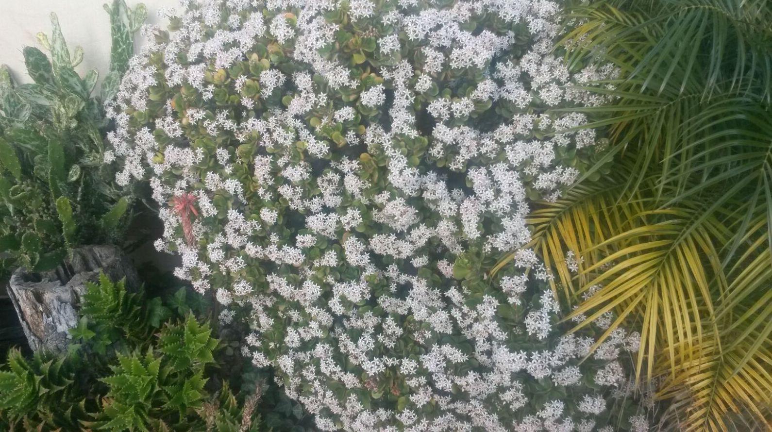 Mantenimiento de jardines. Todo tipo de plantas