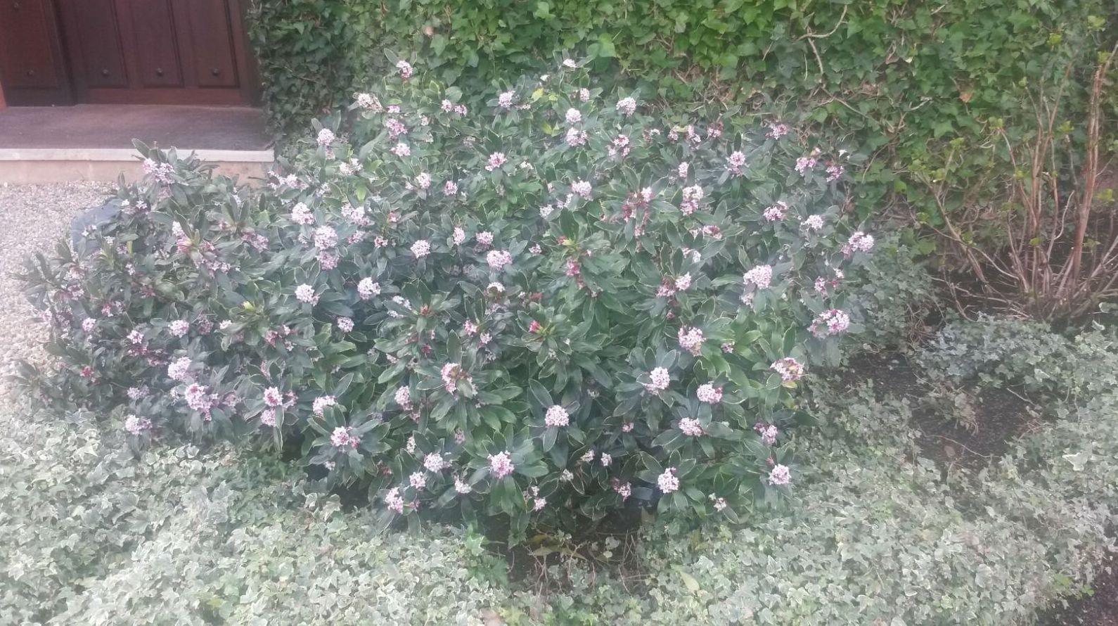 Mantenimiento de jardines en Bizkaia